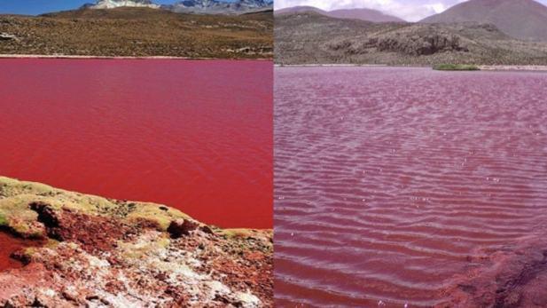 حدث مرعب.. البحر يتحول إلى برك من الدماء في المملكة والسكان يصابون بحالة هلع شديدة (فيديو + صور)